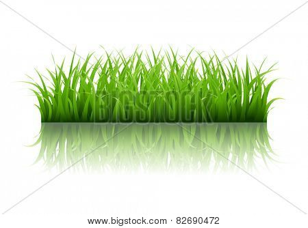 Green Grass Border With Gradient Mesh, Vector Illustration