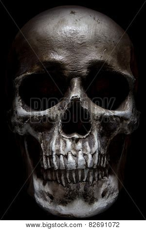 Scary Human Skull