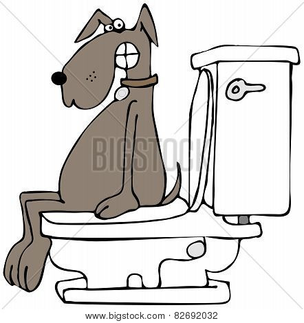 Dog on a toilet