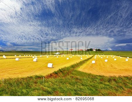Summer Iceland. Rural pastoral after harvesting. Big field with haystacks.