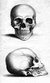stock photo of frontal lobe  - Front and side engraving of human skull by William Miller after drawing by W Miller published in Engravings of the Skeleton of the Human Body - JPG