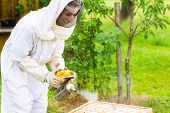 stock photo of smoker  - Beekeeper with smoker controlling beeyard and bees - JPG