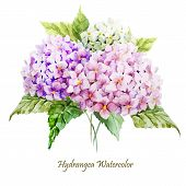 stock photo of hydrangea  - Beautiful watercolor vector hydrangea bouquet different colors - JPG