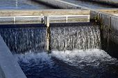picture of brook trout  - Fish farm in the cool clear water channels - JPG