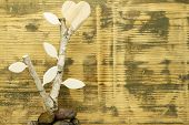 image of birchwood  - Background made of spruce wood with Birch Wood and wooden heart  - JPG