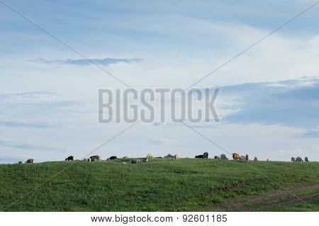 A Flock Of Goats Grazing In An Open Field