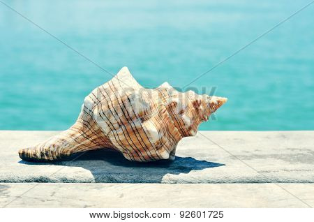 closeup of a conch on an old wooden pier on the sea, with a filter effect