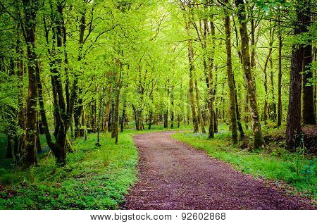 Footpath In Green Forest