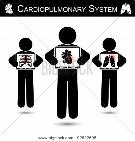 Cardiopulmonary System
