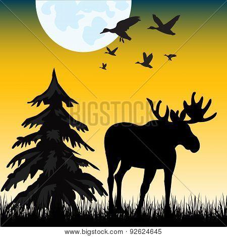 Moose On Glade