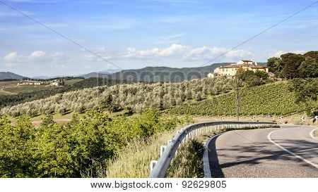 Vineyards And Olive Groves In Tuscany