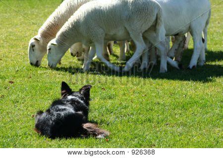 Arbeiterklasse Hund 3