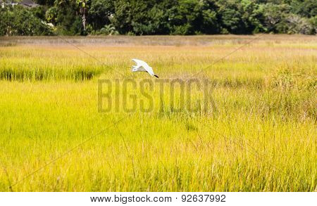 White Egret Flying Over Golden Green Grass
