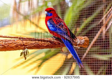Blue And Red Parrot