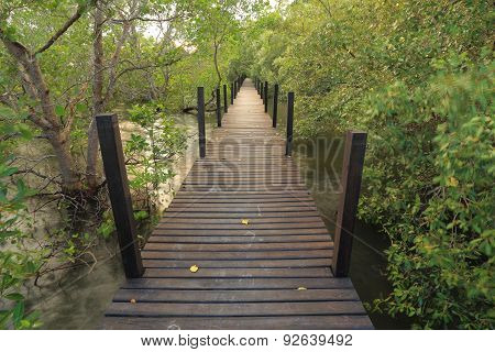 Mangrove forest and wood bridge