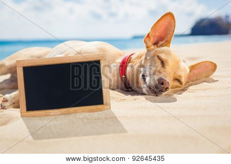 Relaxing Dog On The Beach