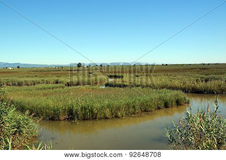 View At Water And Waterplants In The Delta