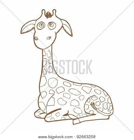 Beautiful adult Giraffe looking at us