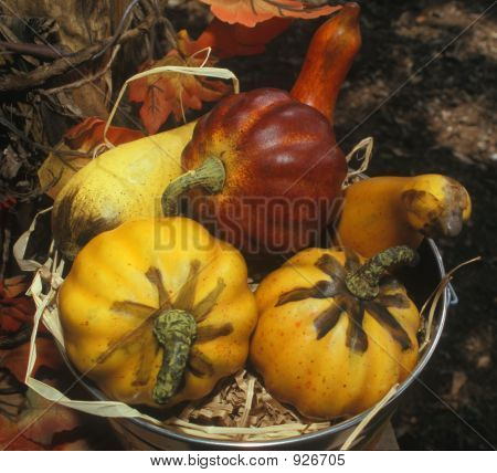 Red And Yellow Gourds