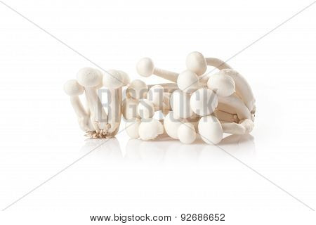 Fresh  white mushrooms