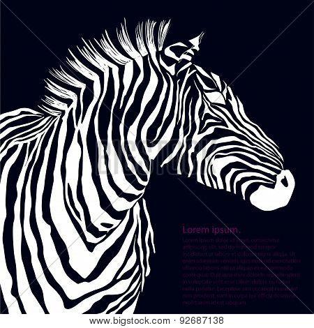 Animal white illustration silhouette zebra. Vector
