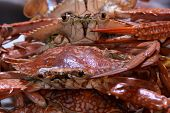 image of crab  - Boiled Crabs, Ready to cook for Thai Crab Curry