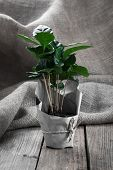 picture of sackcloth  - coffee plant tree in paper packaging on sackcloth wooden background - JPG