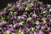 picture of rose bud  - collection of dry pink tea rose buds - JPG