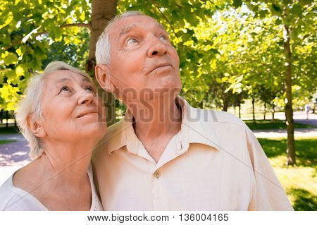 The happy old couple looking up in surprise in the summer on a walk in park.