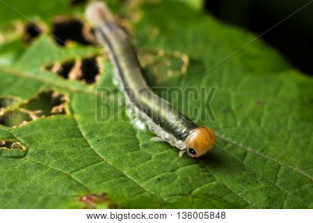 Insect, worm in Da Lat rain forest  - Bidoup nui ba national park