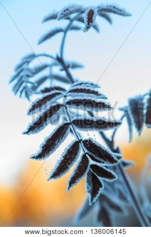 Branch Of Tree Covered With Hoarfrost Against The Blue Sky