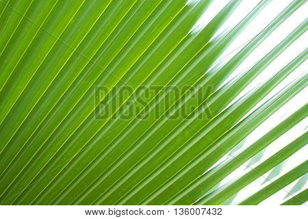 Close-up On Palm Leaves