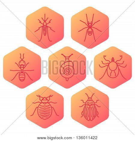 Insect line icon set made in trendy linear style. Pest control hexagon set. It can be used for web and mobile applications by exterminator service and pest control companies. Vector illustration.