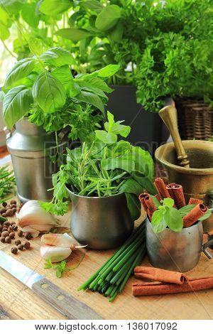 Fresh herbs from garden in the kitchen