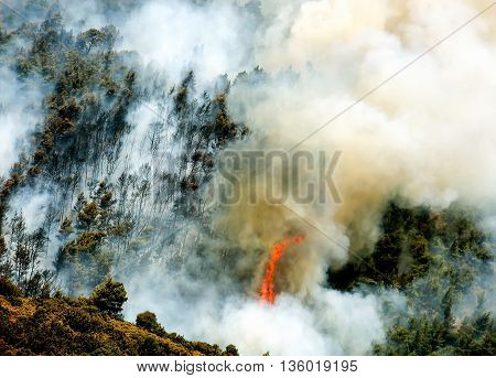 Fire In Forest Areas In Viotia In Central Greece