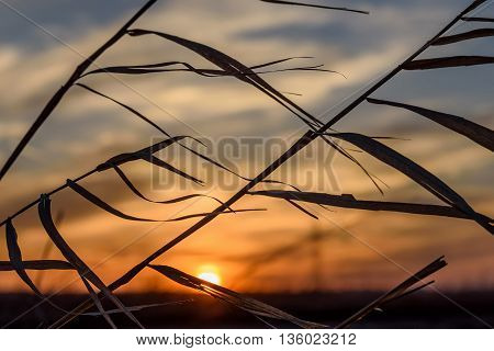 Beautiful natural abstract background of dry grass on a blurred background of blue sky clouds and the sun at sunset