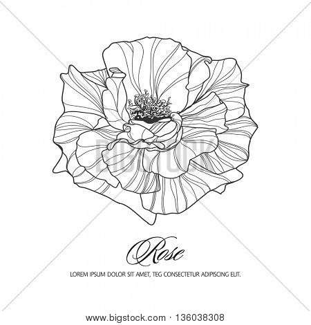 Greeting card with rose, ink sketch