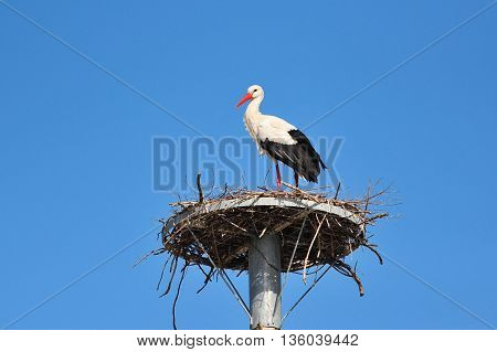 European stork nesting on a metal structure