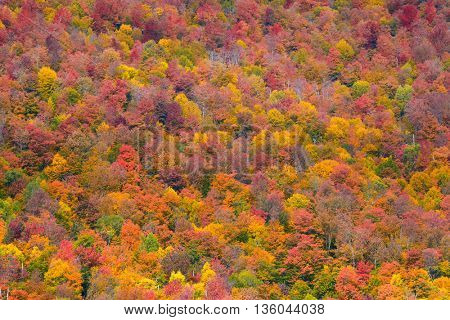 Autumn foliage abstract background in New England area.