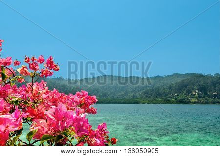 Scenic view of golden shore on tropical island with bougainvillea
