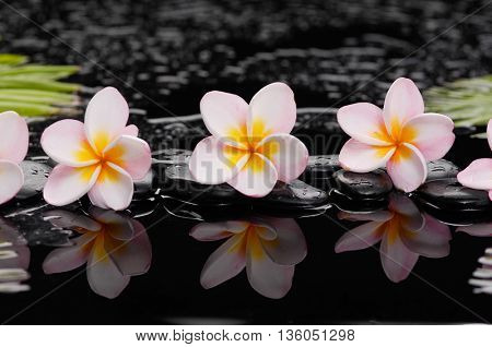 frangipani with palm and black wet pebbles