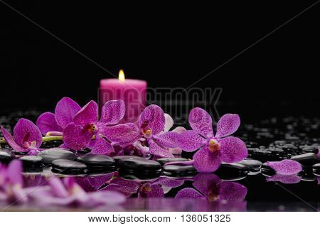 Branch orchid and candle on black stones