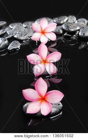 Three frangipani and black wet pebbles