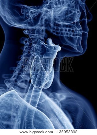 3d rendered, medically accurate illustration of the throat anatomy