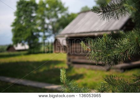 The branch of a pine on a background of the old Russian-style log houses