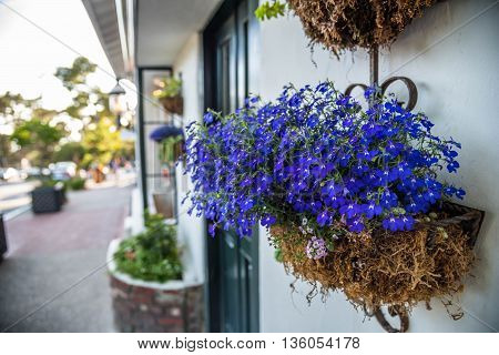Hanging basket in full bloom on traditional town house.