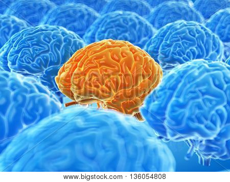 3d rendered, medically accurate illustration of the human brain
