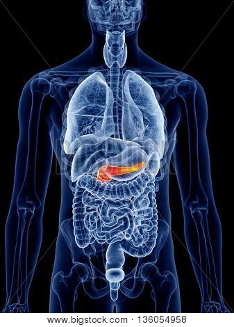 3d rendered, medically accurate illustration of the pancreas