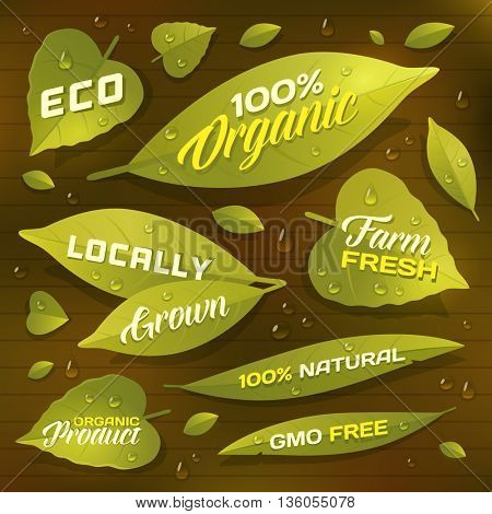 Set of fresh green leaves as labels, badges for natural, organic, locally grown products. Organic products packaging. Vector illustration.
