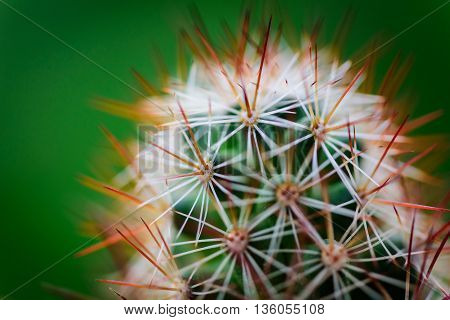 Close up prickly cactus with blurred green background. Selective focus